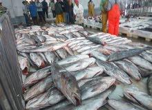 السمك الظازج