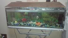 حوض لسماك. مع سمك