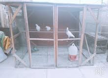 للبيع أو للمراوس برج تفصال يصلح لجميع انواع الطيور والقفص سيور بي بابين وكلش قوي
