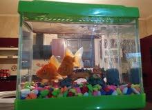 حوضين سمك مع أسماك