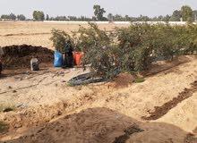 مزرعة 18 فدان بالصالحية القديمة كاملة المرافق رى مزدوج غمر وارتوازى