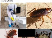 خدمات محاربة الحشرات والفئران