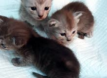 Kittens for sael