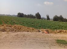 ارض زراعيه خصبه 20000للفدان