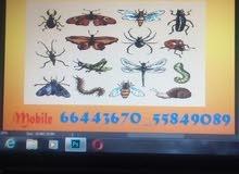 شركة الاصيل لإبادة جميع انواع الحشرات المنزلية