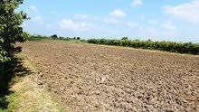 امتلك مزرعه كامله المرافق علي طريق مصر الفيوم 50 كيلو من القاهره