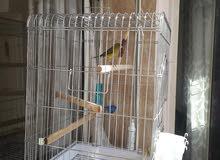 قفص الطيور