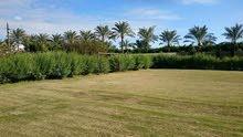 مزرعه 200 فدان علي الصحراوي وفيلا