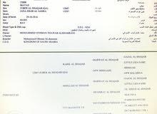 فرس عربية أصيلة نسب عالي للبيع