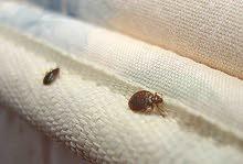 مكافحة ومعالجة بق الفراش بادوية صديقة للبيئه وبدون روائح