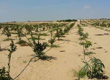 أرض ممهدة ومستوية صالحة لكافة المشاريع (داجني -سمكي -حيواني) وتقدر تبني عليها فلل واستراحات