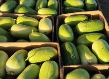 اصناف الخضروات من المزرعه طازج مزارع واحة السويق