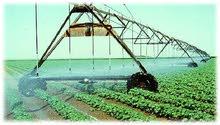 مهندس زراعي  انتاج محاصيل وخضر واعلاف
