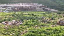 للبيع اربعه دنم على شارعين مستويه مرتفعه مسنسله مطله على جبال فلسطين