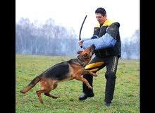 تدريب  و ترويض الكلاب على الحراسة و الطاعة