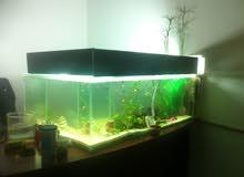 حوض سمك بطول 1.5 متر