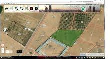 مزرعة 13 دنم للبيع - قصر الحلابات