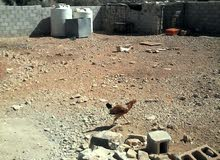 دجاج بلدي ودجاج فيومي