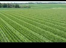 اراضي زراعيه للبيع - وادي النطرون