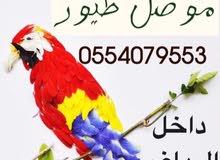 موصل طيور داخل احياء الرياض والخرج