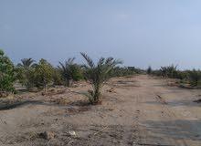 فرصة 15فدان مزروعة أشجار مسماره أدفع 40% والباقي على سنتين الاستلام فوري