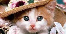 مطلوب قطة للتبنى