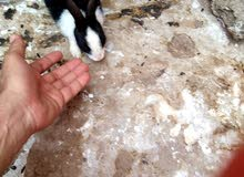 ارانب بيتي بديل القطة والكلب