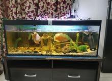 Complete fish tank حوض سمك متكامل