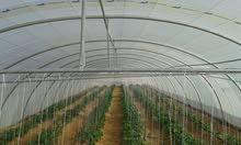بيوت محمية زراعية للايجار بمحافظة الافلاج