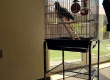 Parrots and Birds cages available Special Prices