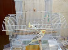 Bird with cage for sale