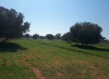 أرض مساحتها هكتار ملك مقدس بالقويعه يبعد  800م من الطريق الساحلي للبيع