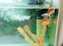 حوض سمك جاهز