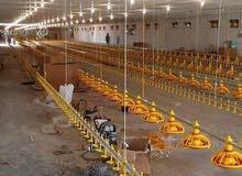 مزارع دواجن للايجار بالفيوم مجهزه