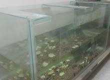 حوض سمك حجم كبير للبيع