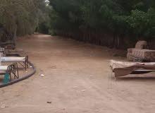 مزراعة ومنتج للبيع فى محافظة المزاحمية