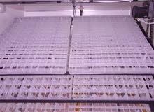 فقاسه للبيع سعه 528 بيضه شبه جديده بسعر مغري  الزرقاء الرصيفه عوجان 0786216776