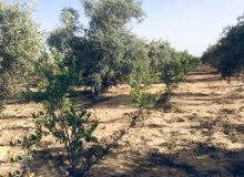 فدادين زراعية للبيع من المالك مباشرة في الاسماعيلية