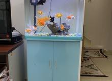 للبيع الحوض أسماك