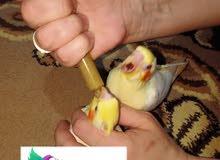 منتج تاكيل يدوي للطيور والتدريب تاكيل يدوي كوكتيل