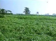 للبيع أرض زراعية محاصيل 5 فدان جنوب بورسعيد