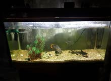 حوض سمك مع 3 اسماك  بسعر مغري
