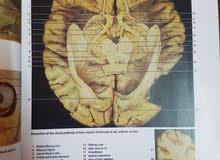 كتاب تشريح طبي لصور جسم الانسان