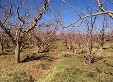 2 هكتار شجر تفاح كبير كينتج للبيع نواحي ميدلت الماء متوفر و2 بقع وسطها للبناء