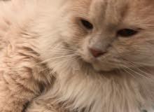 قطوه العمر غير معروف