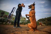 فندقة و تدريب جميع انواع الكلاب ب 3 لغات بارخص الاسعار