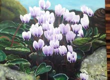 cyclamen flower painting