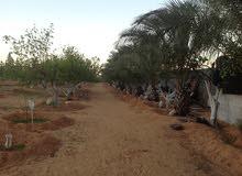 ارض خلة الفرجان خلف شيل خنورة 1500