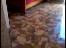 استيديو غرفة مفروش ارضي مستقل للايجار غرفه مقابل جامعة مؤتة الكرك
