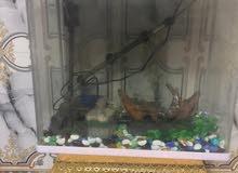 حوض سمك للبيع كامل